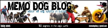 MEMO DOG BLOG, about all dog sports in Europe