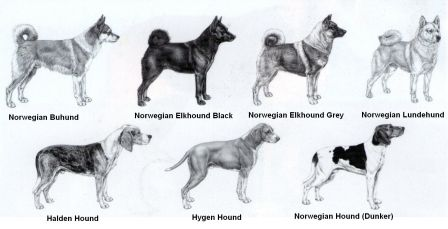 Native dog breeds of Norway