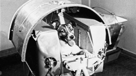 November 3, 1957: Laika the space dog