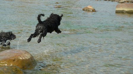 Pumi Forro diving in the Baltic sea