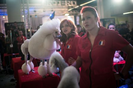 World-Team-Dog-Grooming-Championships-Daisy