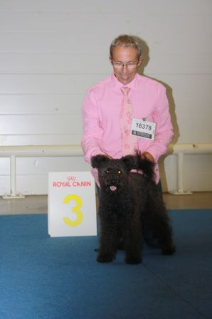 Felálló-Fülű Maasik, 3rd at World Dog Show 2014, bitches Junior Class