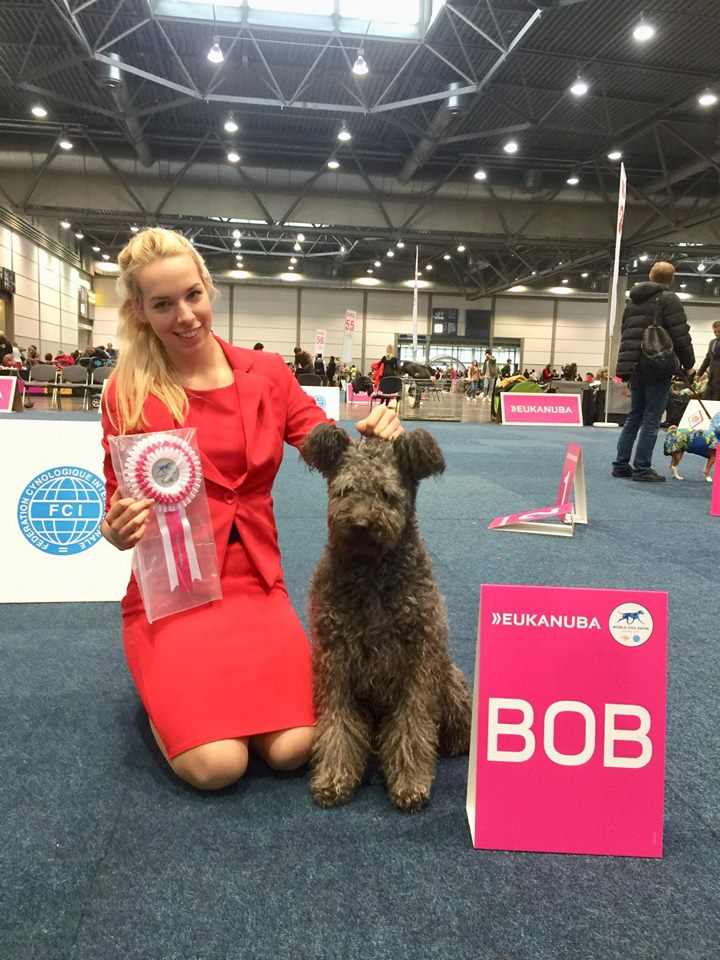 "Pumi Pilisi- Kócos Jóbarát ""Minek"" World Winner 2017 and Best of Breed"