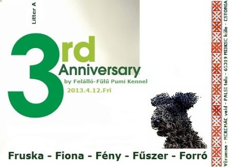 3rd birthday litter A Felálló Fülű Pumi Kennel - flyer