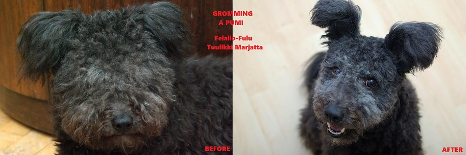 Tuulikki Before-After, grooming 06/11/2017