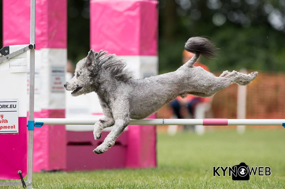 Beat with Wendy Willemse - NK Agility - 2018, June 17