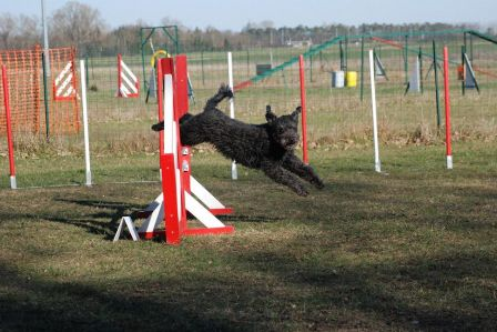 Pilisi-Kócos Drága in agility (Jump, march 2010)