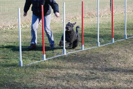 Pilisi-Kócos Drága in agility (slalom, march 2010)