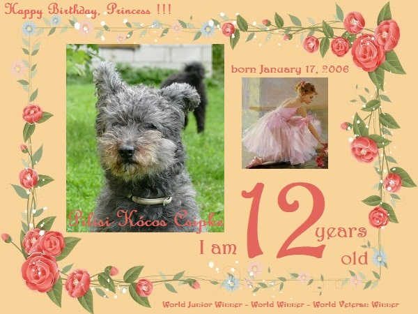 Csipke - j'ai 12 ans - 12th Birthday