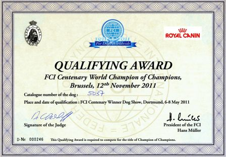 QUALIFYING AWARD - FCI centenary World Champion of Champions - Pilisi-Kocos Csipke.