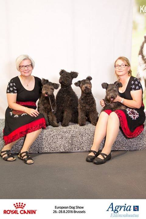 European Dog Show 26082016 Brussels - Napos kennel